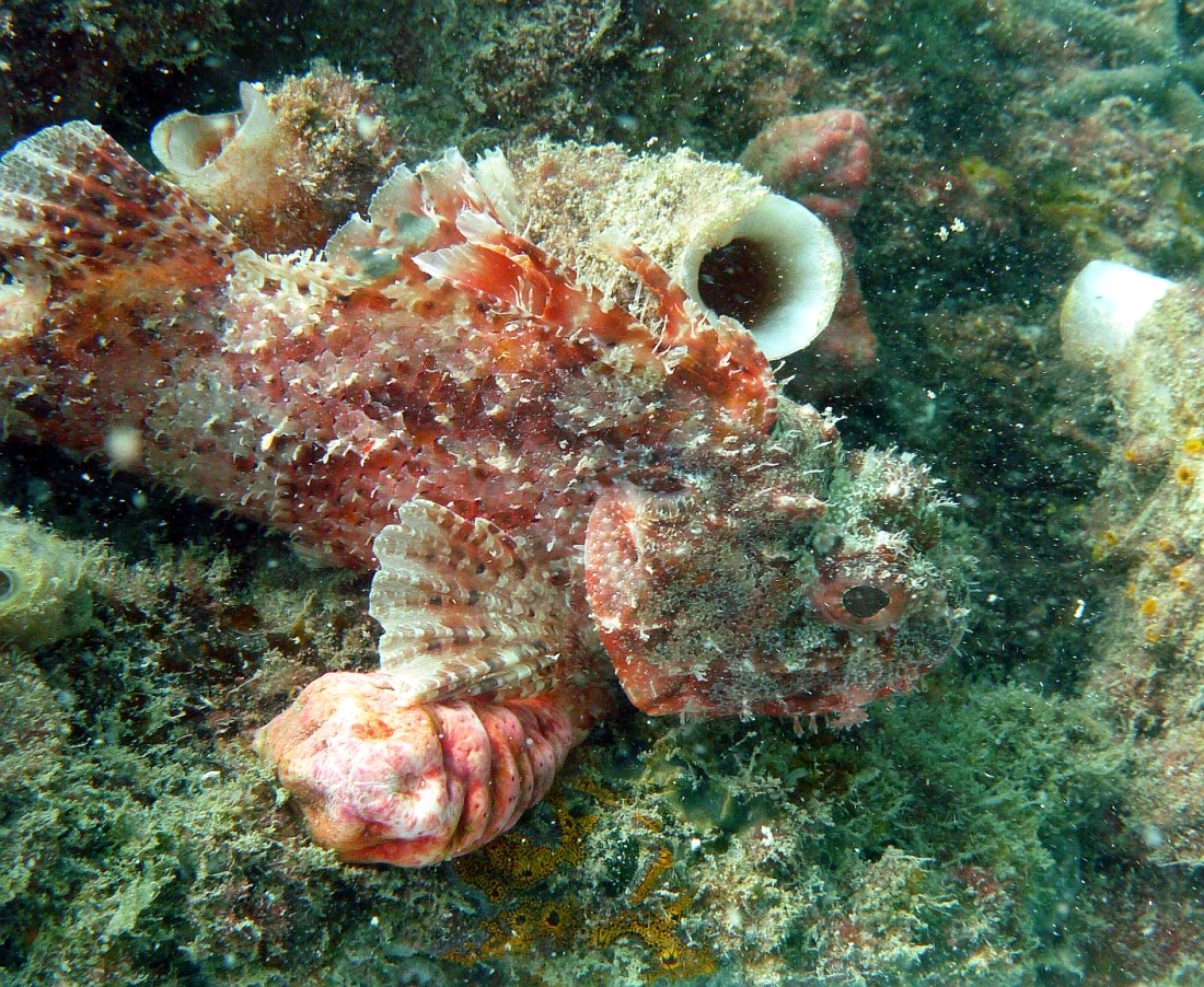 Some dive pics from a site at day and then night - Seiko SBDX001 Robb%27s%20Jetty%2001-06-2013%20fish%205