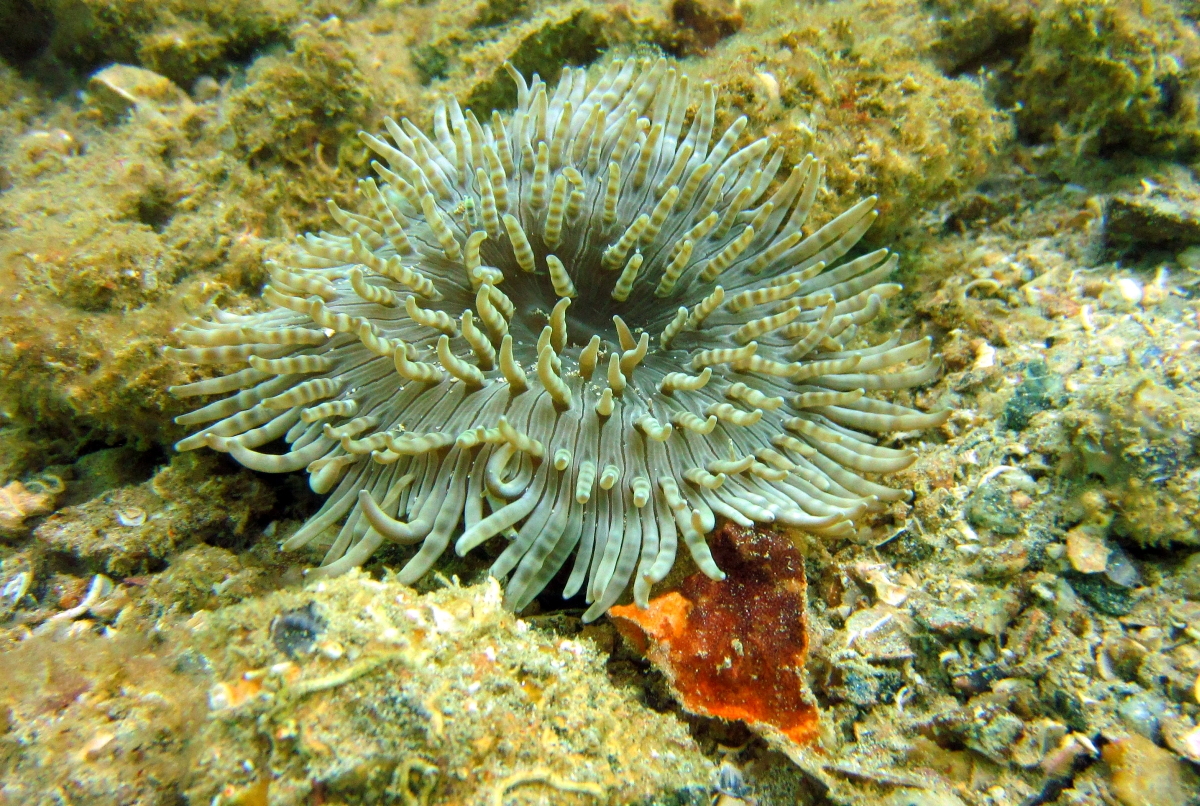 Sunday Dive: 21-04-2013 Rockingham - Orient Mako Rockingham%20grain%20teminal%2021-04-2013%20anenome%202