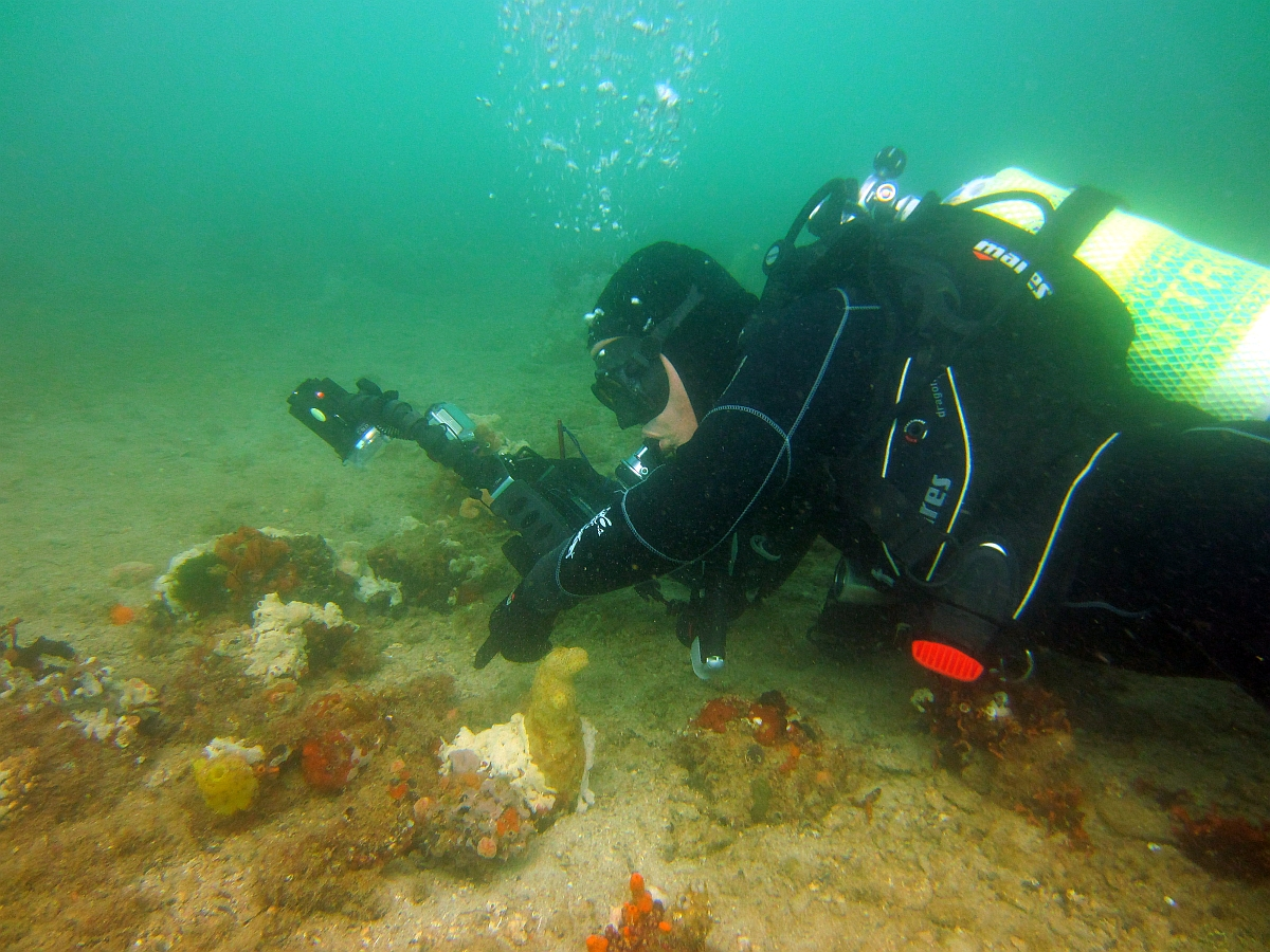 Sunday Dive: 21-04-2013 Rockingham - Orient Mako Rockingham%20grain%20teminal%2021-04-2013%20buddy%204