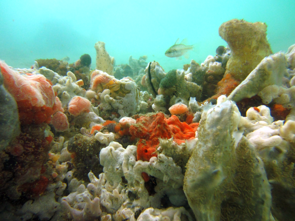 Sunday Dive: 21-04-2013 Rockingham - Orient Mako Rockingham%20grain%20teminal%2021-04-2013%20sponges%204