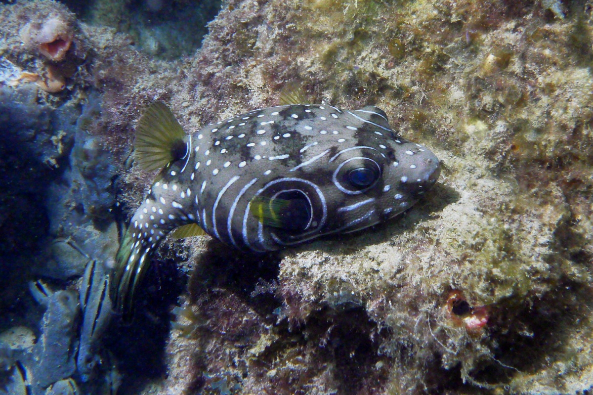 Some dive pics from a site at day and then night - Seiko SBDX001 Sue%27s%20Groyne%2001-06-2013%20fish%201
