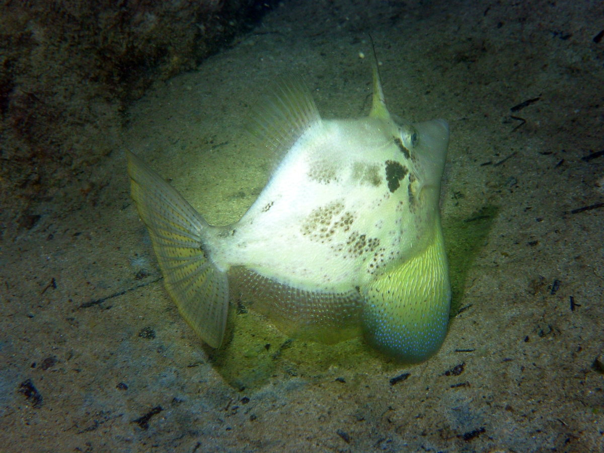 Some dive pics from a site at day and then night - Seiko SBDX001 Sue%27s%20Groyne%2001-06-2013%20fish%202